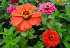 Описание и внешний вид цветка