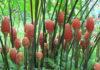 Внешний вид и описание цветка имбиря