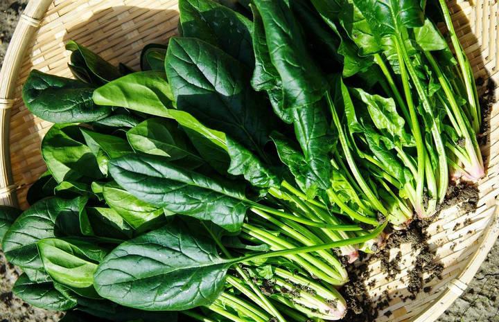 Ранний урожай шпината на окне, в теплице и открытом грунте