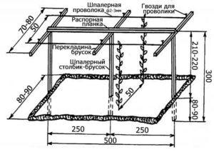 Размеры шпалеры для огурцов