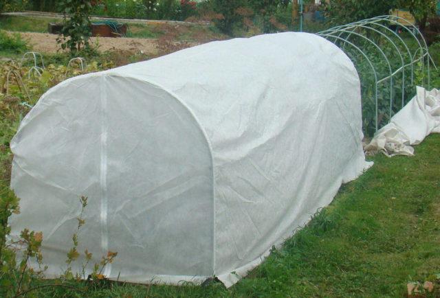 Сооружение для укрытия арбузов от заморозков