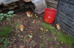 Выбор места для посадки грибов в саду