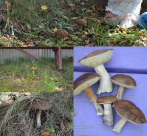 Разведение грибов на садовом участке