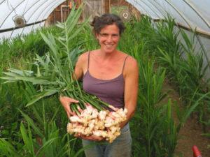 Агротехника выращивания имбиря