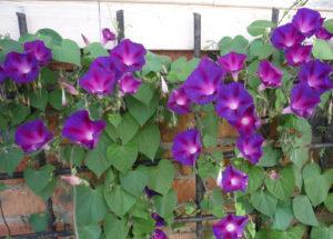 Опора для цветка ипомея