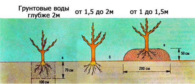 Уровень грунтовых вод при посадке
