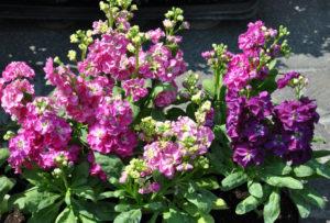 Место в саду для цветка