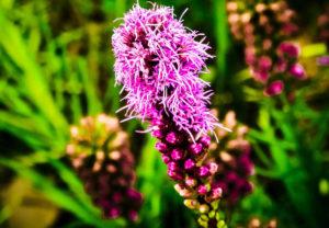 Место для роста цветка
