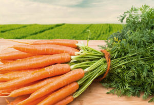 Выращивание моркови на огороде
