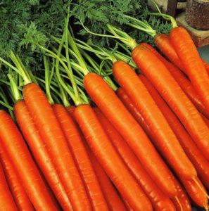 Где сажать морковь
