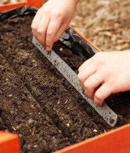 Грунт для выращивания моркови