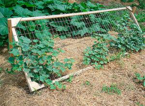Шпалерная сетка для подвязки огурцов