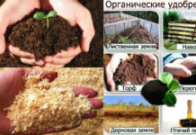 Органика для открытого грунта