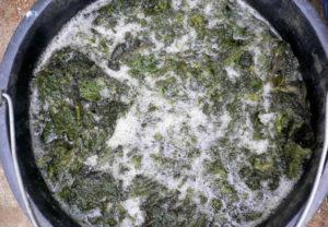 Настойка из травы для удобрения растений