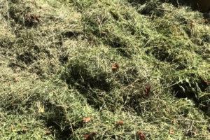 Скошенная трава для удобрения и мульчи