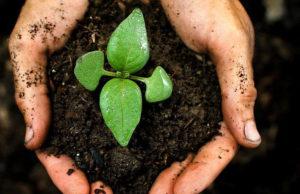 Торф как органическое удобрение