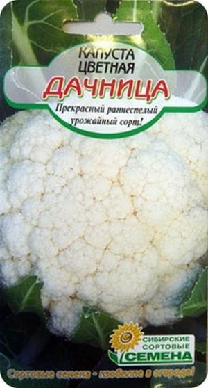 Сорт цветной капусты Дачница