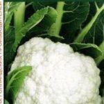 Сорт цветной капусты Опаал