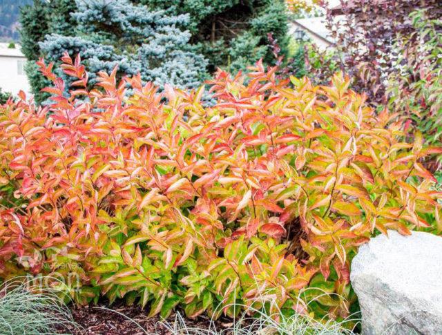 Уход за растением осенью