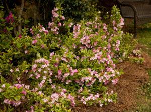 Место в саду для посадки
