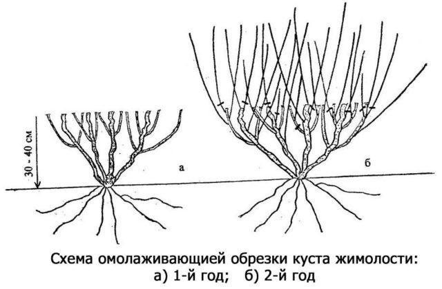 Обрезка кустарника