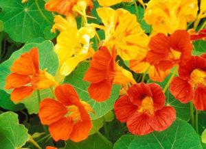 Внешний вид и описание цветка