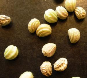 Собранные семена