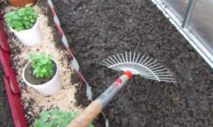 Почва для выращивания огурцов