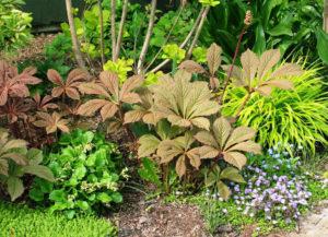 В сочетании с другими растениями