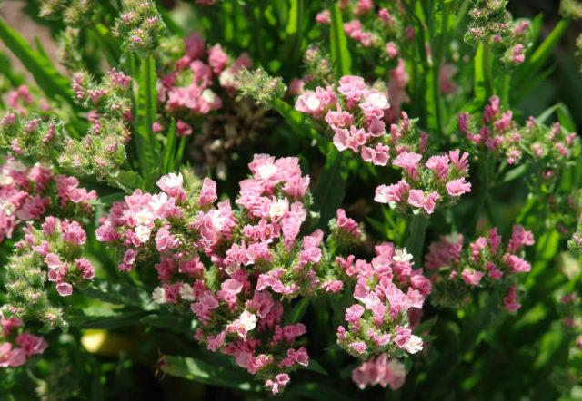 Место с саду для цветка