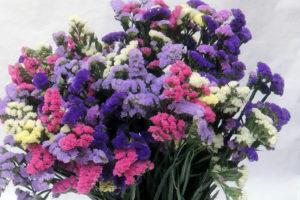 Фото цветка статица