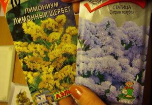 Купить семена лимониума