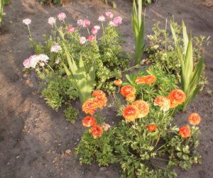 Место в саду для посадки лютика