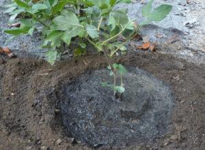 Почва для хорошего роста растения