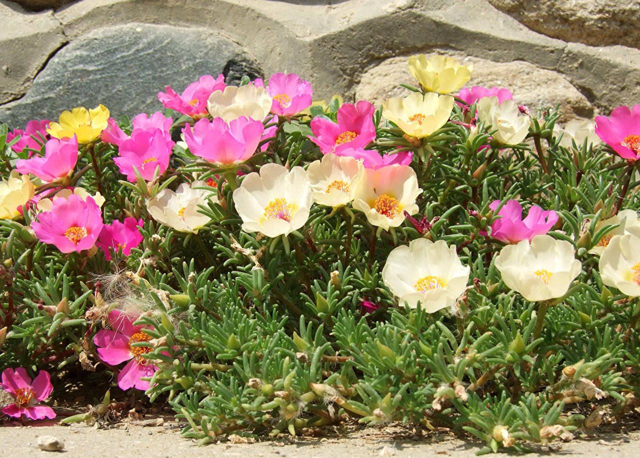 какие цветы любят песчаную почву с фото печатающий ткани