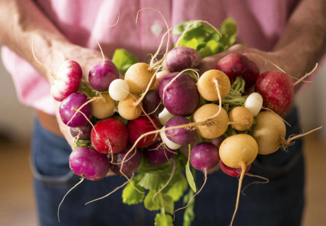 Как правильно выращивать редис в открытом грунте?