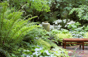 Посадка и уход за папоротником на даче в саду