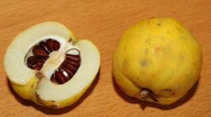 Плод айвы с семенами
