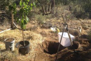 Как подготовить яму для посадки вишни
