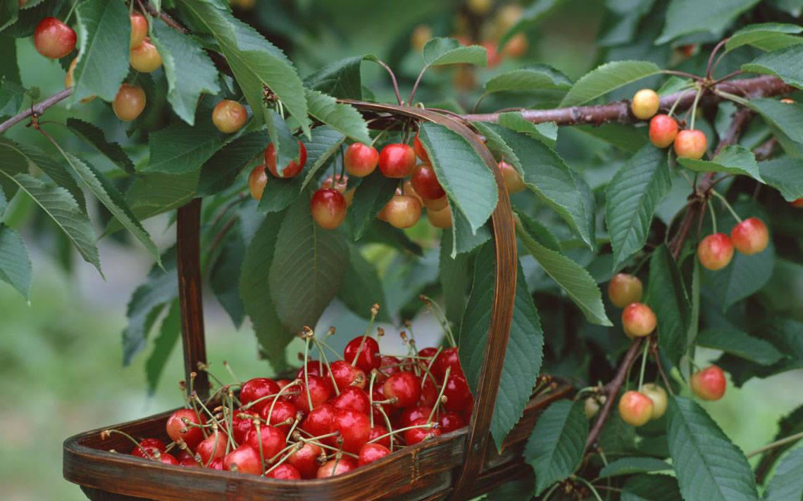 Секреты ухода за яблонями весной, основные рекомендации для садоводов
