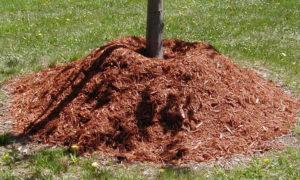 Мульчирование приствольного круга дерева