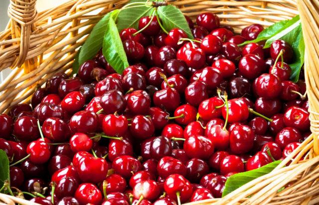 Хороший урожай вишни