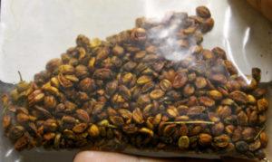 Семена древогубца