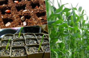 Сажаем растения в апреле