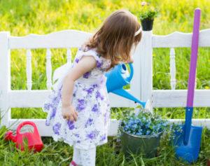 Агротехника выращивания незабудки в открытом грунте