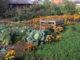 Что посадить весной на огороде
