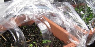 Правила стратификации семян растений