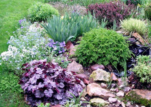 Гейхера в садовом дизайне