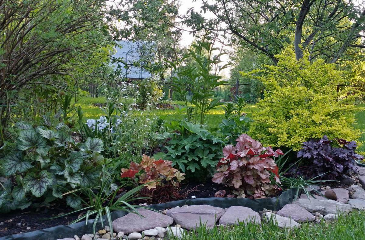 барбарис с какими растениями садить фото боковых стенках готового