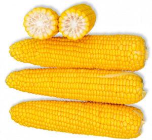 Сорт кукурузы Добрыня